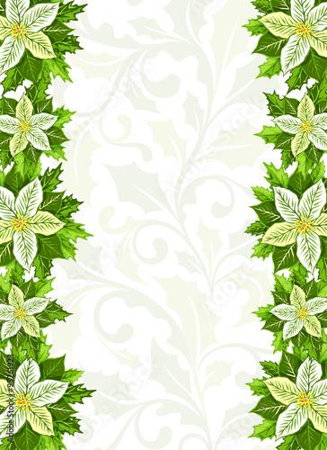 Christmas background with white poinsettia and holly leaves