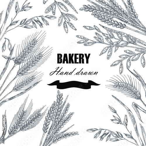 Bread design template Hand drawn wheat set Vector illustration - wheat template