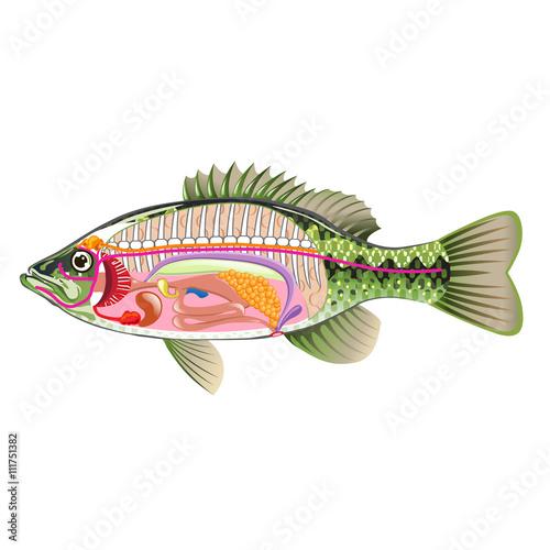 Label Fish Diagram Wiring Diagram