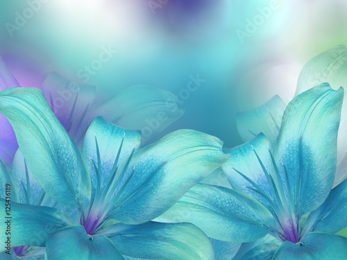 blue- turquoise lilies flowers, on turquoise-purple-blue blurred