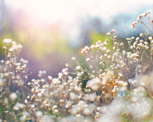Pretty dainty flowers against colorful nature background - Buy this