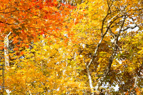Colorful autumn tree forest serenity scene - Buy this stock photo