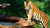 Maharajah Jungle Trek®