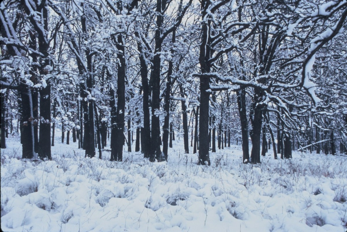 Falling Snow Wallpaper Animated Iphone Death Amp Robert Frost S Stopping By Woods On A Snowy