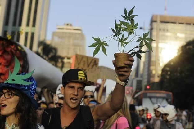 Why Should Marijuana Be Legalized? Argumentative Essay Example