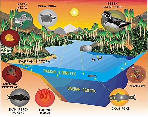 Macam Macam Lumut Dan Gambar Barefooted Tempat Makan Best Lumut Dan Manjung Macam Ekosistem Bio Green