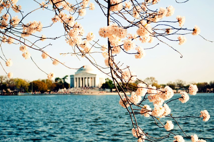 Jefferson Memorial, Tidal Basin and Cherry Blossoms in Washington, DC
