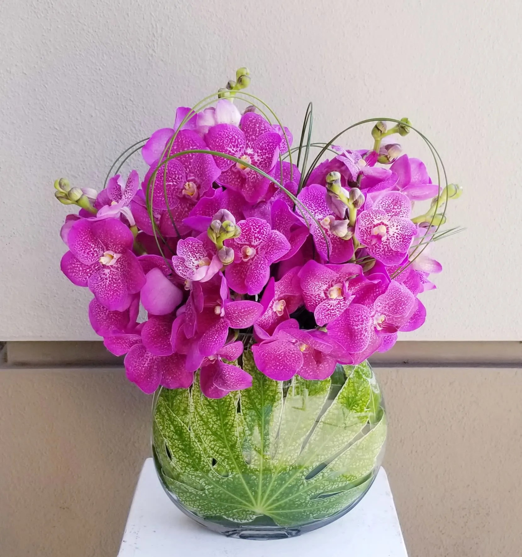 Pink Vanda Orchids In Beverly Hills Ca Apropos Floral Event Design
