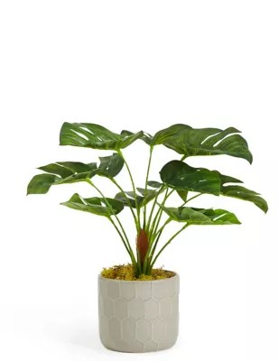 Indoor Small Plants Small Plants Excellent Aglomema Plant With Small Plants
