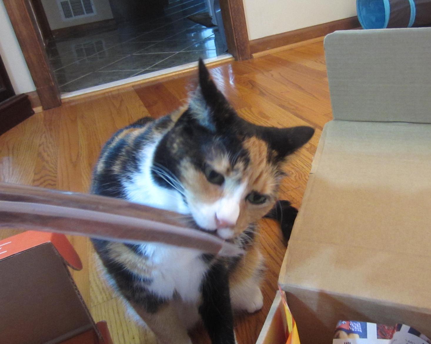 Fullsize Of Barkbox For Cats