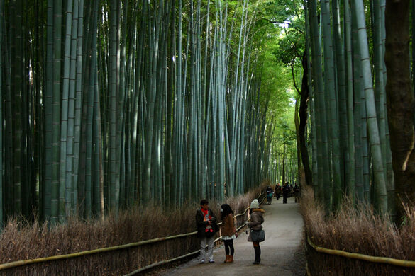 Fall Forest Hd Wallpaper Sagano Bamboo Forest Kyoto Japan Atlas Obscura