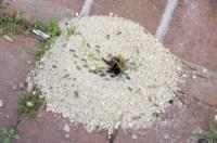 Ameisen - Jetzt schnell und sicher bekmpfen - bewertet.de