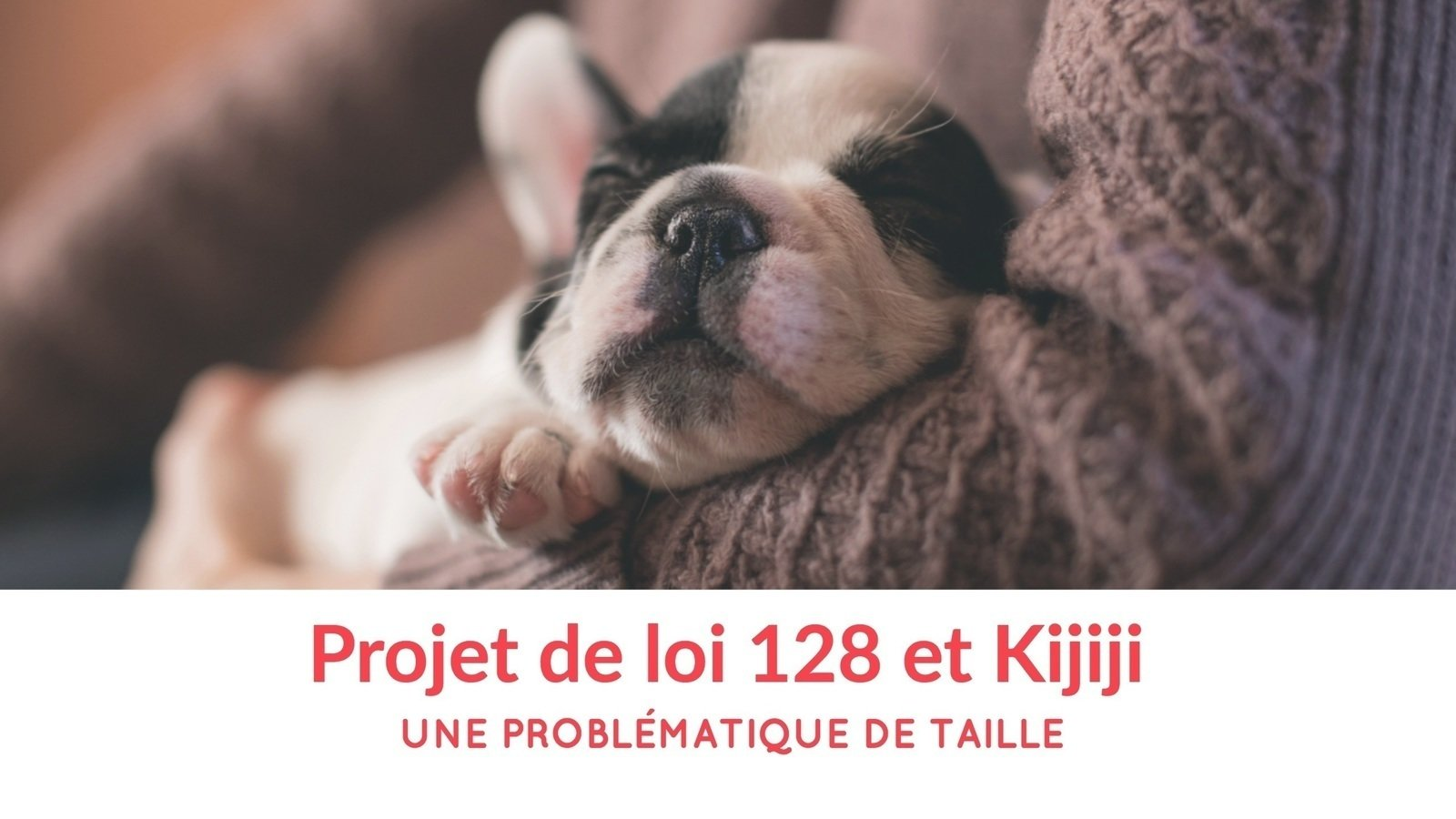 Meuble A Donner Montreal Kijiji Petition Update Chiots à Adopter Sur Kijiji Change Org