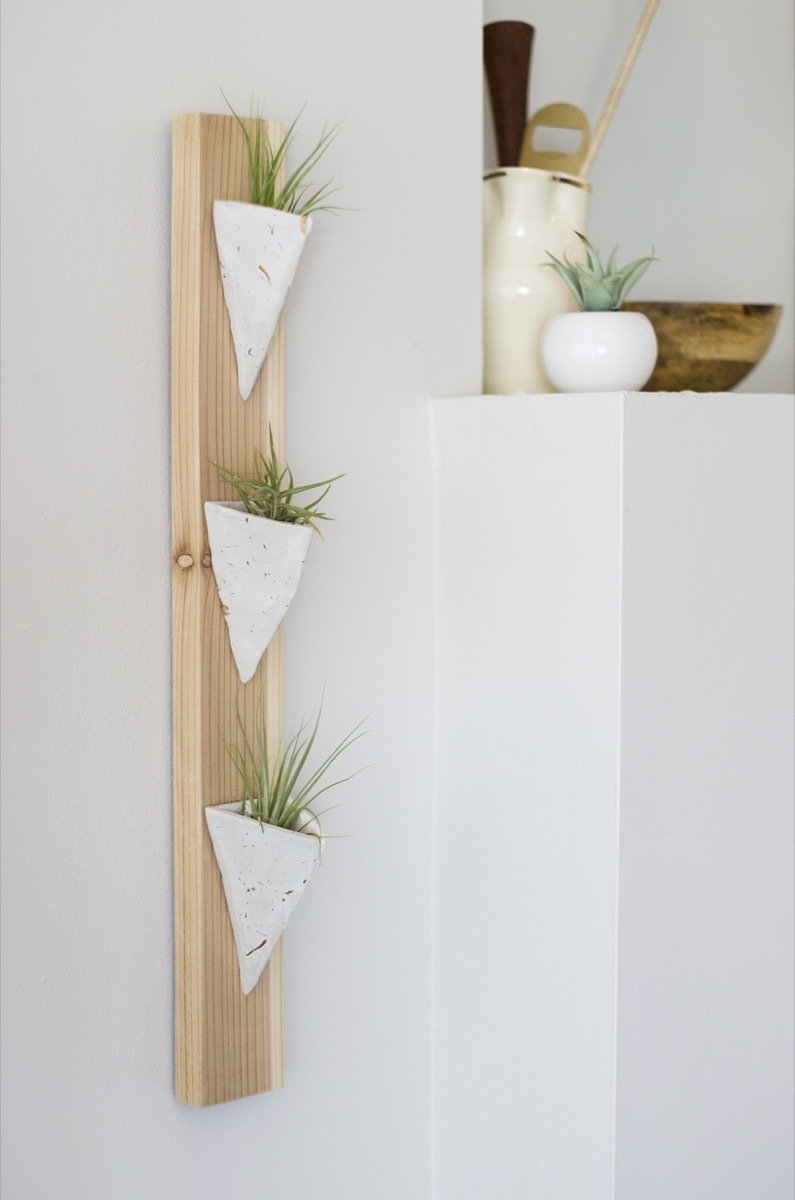 Air Plant Wall Holder Air Plant Holder Diy Quick Wall Art Made From Wood And Clay Curbly