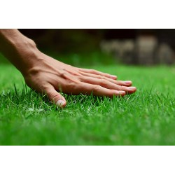 Small Crop Of Big Country Lawn And Landscape