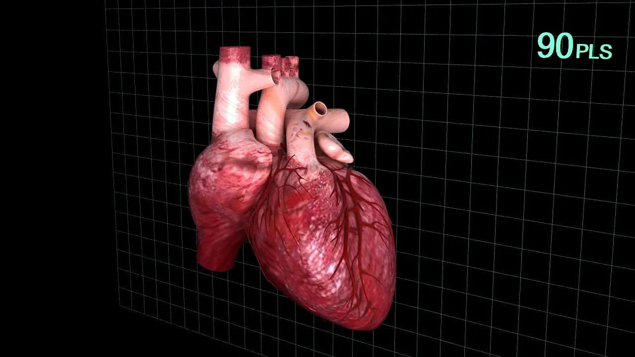 3d Models For Animation Human Heart Animated