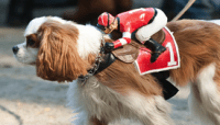 27 dogs who are dressing up as a horse for Halloween ...