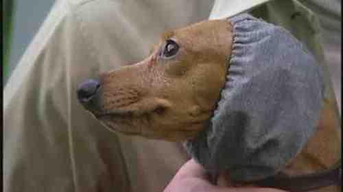 Medium Of Homemade Dog Ear Cleaner
