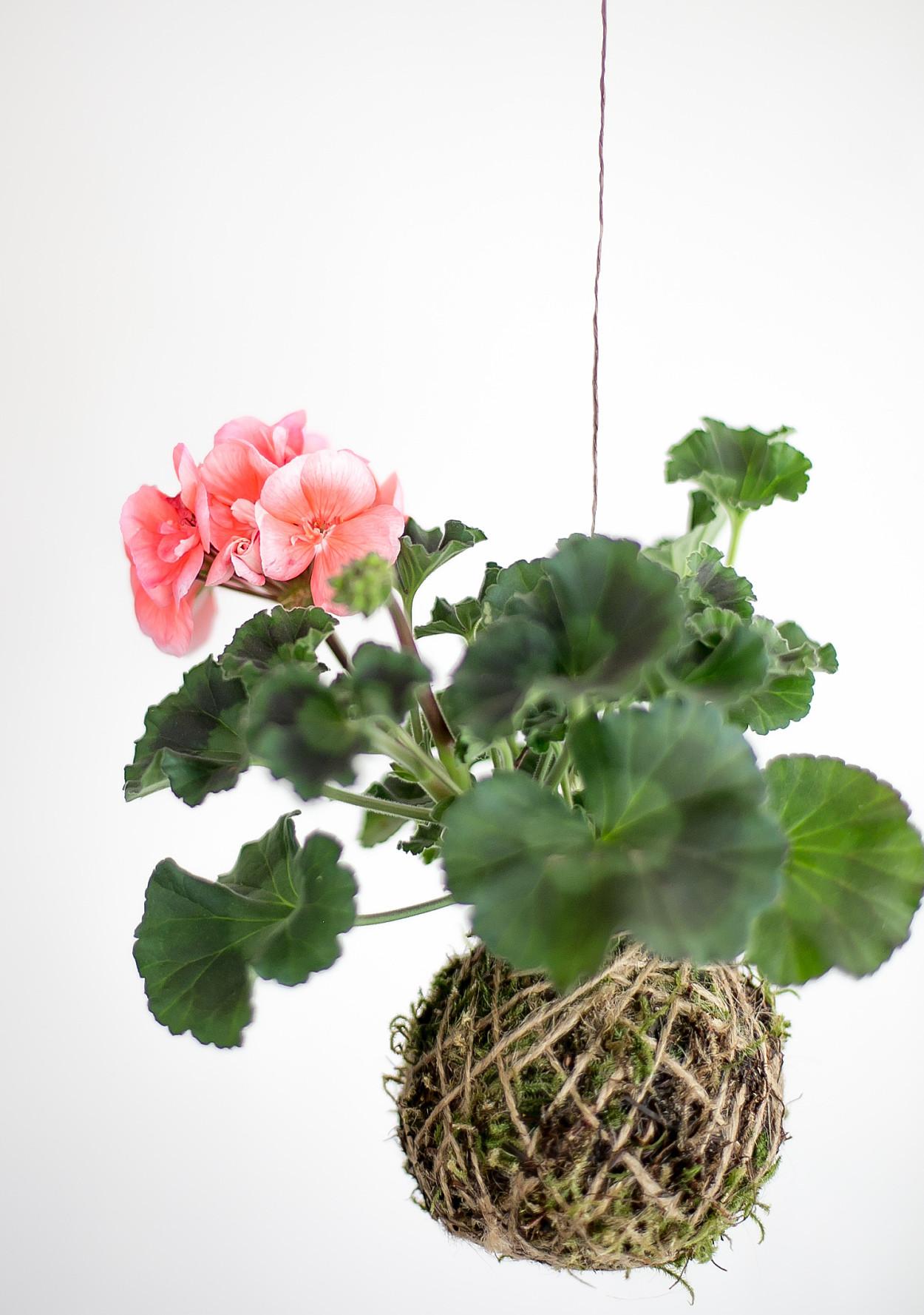 paper flower plants