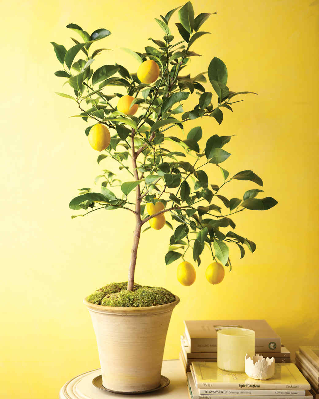 Small Household Plants Grow Citrus Indoors Martha Stewart