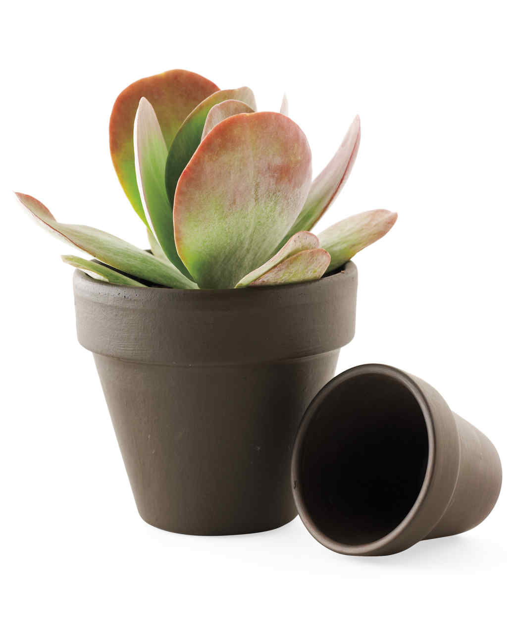 Mini Plant Pots Bulk Decorative Flowerpots And Planters Martha Stewart