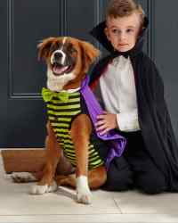 Matching Owner and Dog Costumes for a Pet-rifyingly Cute ...
