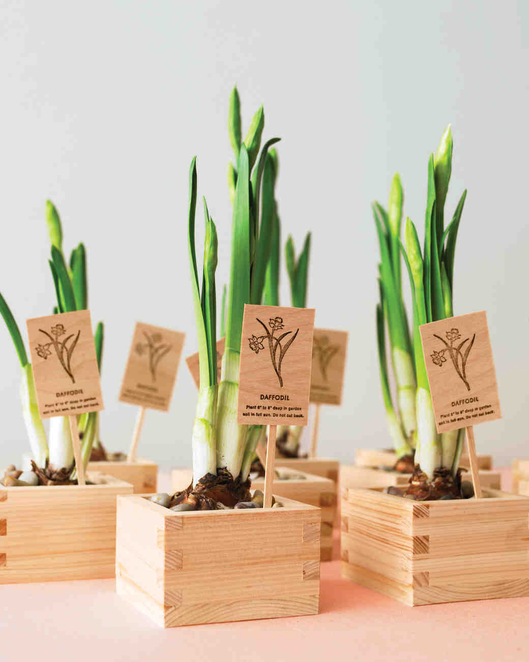 wedding favors wedding favors ideas 6 Vegan Wedding Favors Your Guests Will Love