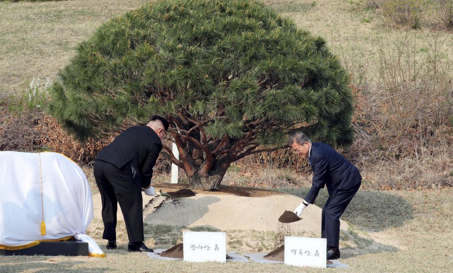 The pine and the poplar a tale of two trees in the DMZ New
