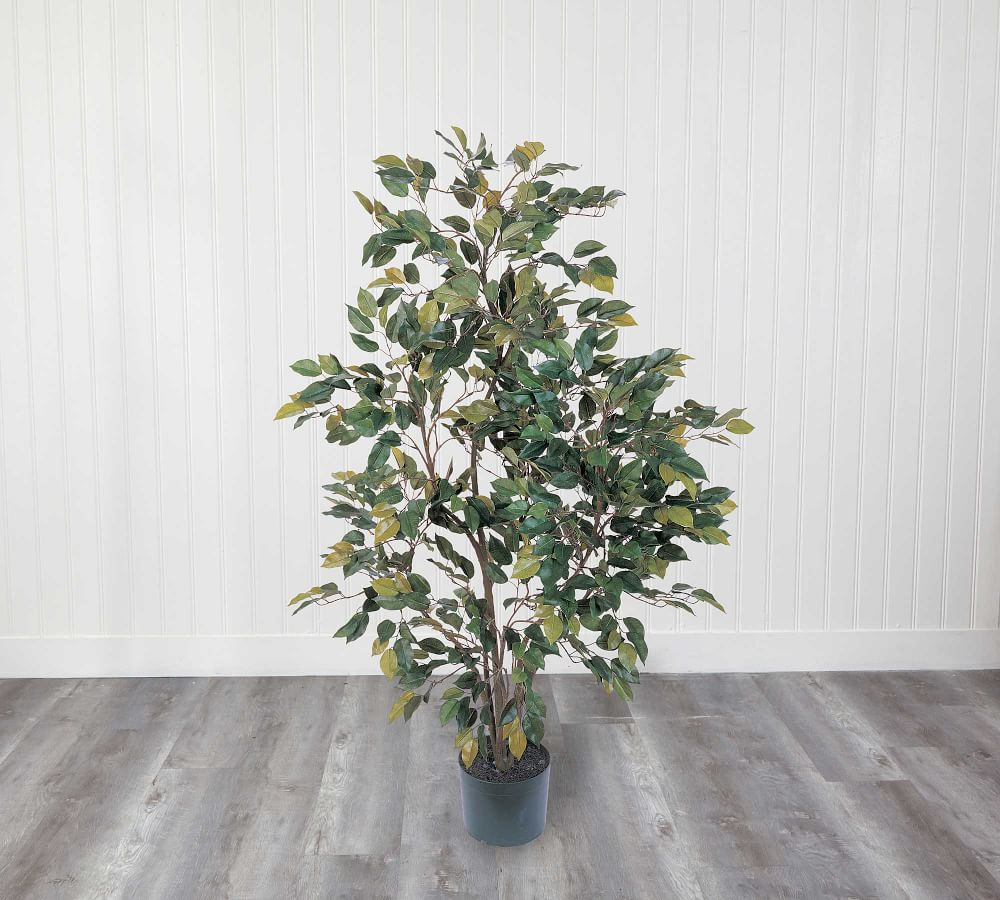 Faux Potted Ficus Tree Pottery Barn