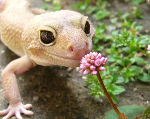 5 Reasons Why Geckos Are Actually The Best