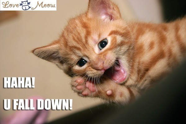 Cute Baby Animal Pictures Wallpapers Add Lolcat Captions Love Meow