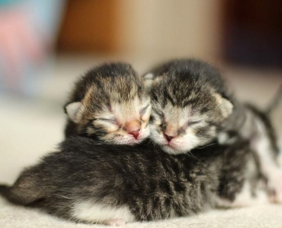 Cute Kitty Cat Wallpapers First Lesson In Kittenhood Pile Up Love Meow