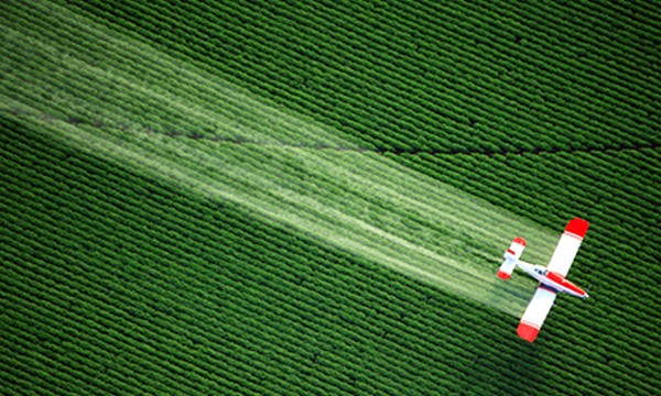 GMO Crops Accelerate Herbicide and Insecticide Use While Mainstream