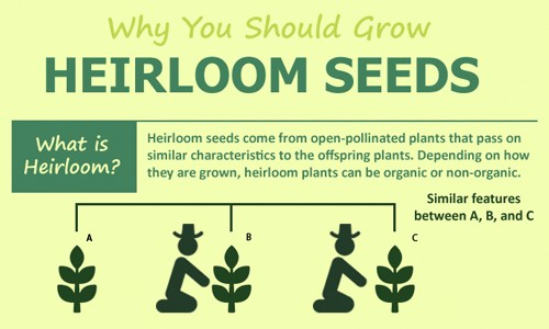 Why You Should Grow Heirloom Seeds - Ecowatch