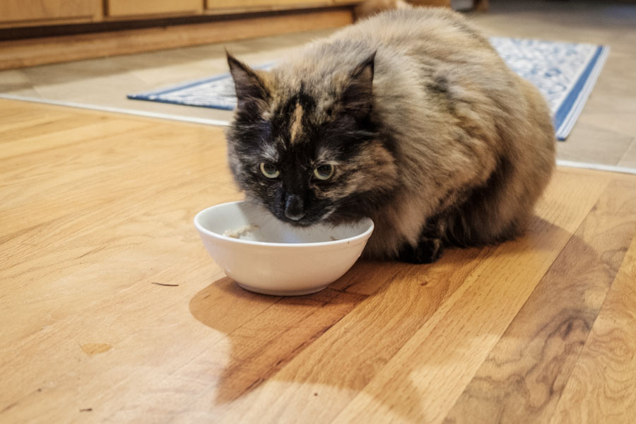 The 9 Best Cat Foods for 2019 Reviews