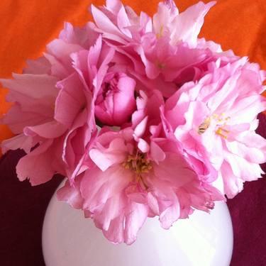Kirschblüten / Cherry blossoms / Flores de cerezo Photography by