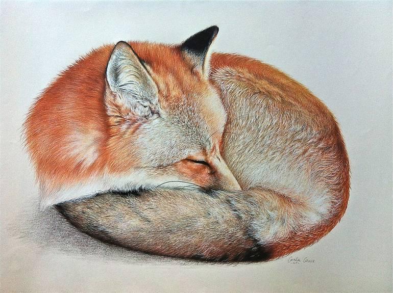 Black White Modern Wallpaper Saatchi Art Sleeping Fox Drawing By Carla Grace