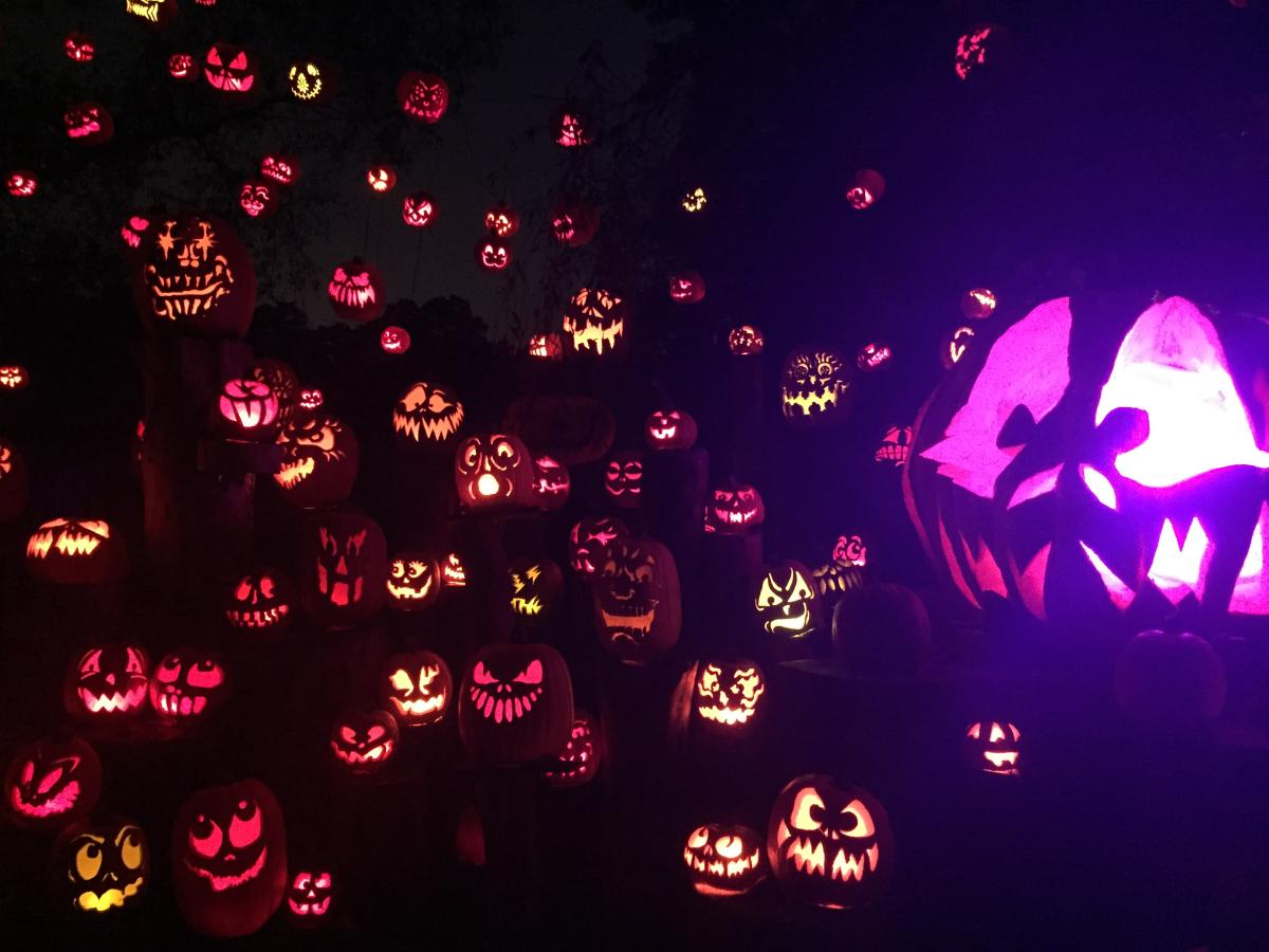 Jack O Lantern Spectacular Is A Must See