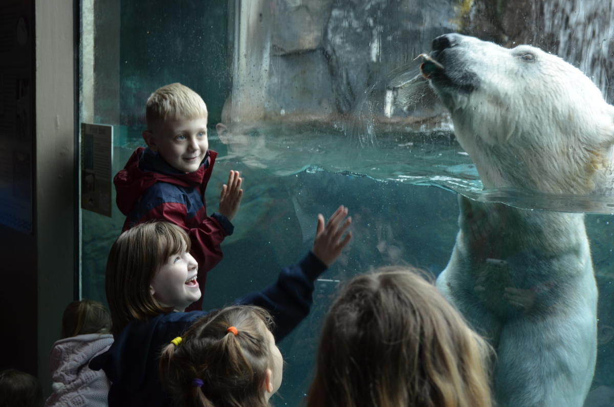 Family Activities For Winter Break In Rochester And The