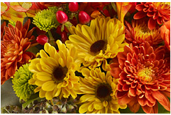 Orange Fall Peonies Wallpaper Discover What Flowers Are In Season Teleflora