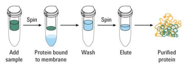 Pierce Strong Cation Exchange Spin Column, Mini - Thermo Fisher - cation exchange chromatography