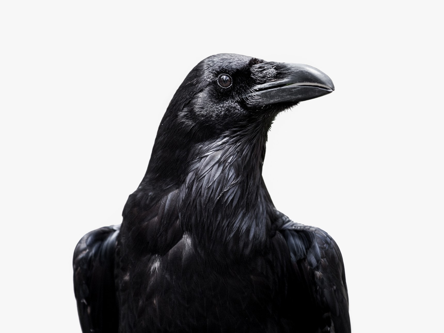 Best Read Ever The Best Fantasy Novel About Crows You Ll Ever Read Wired