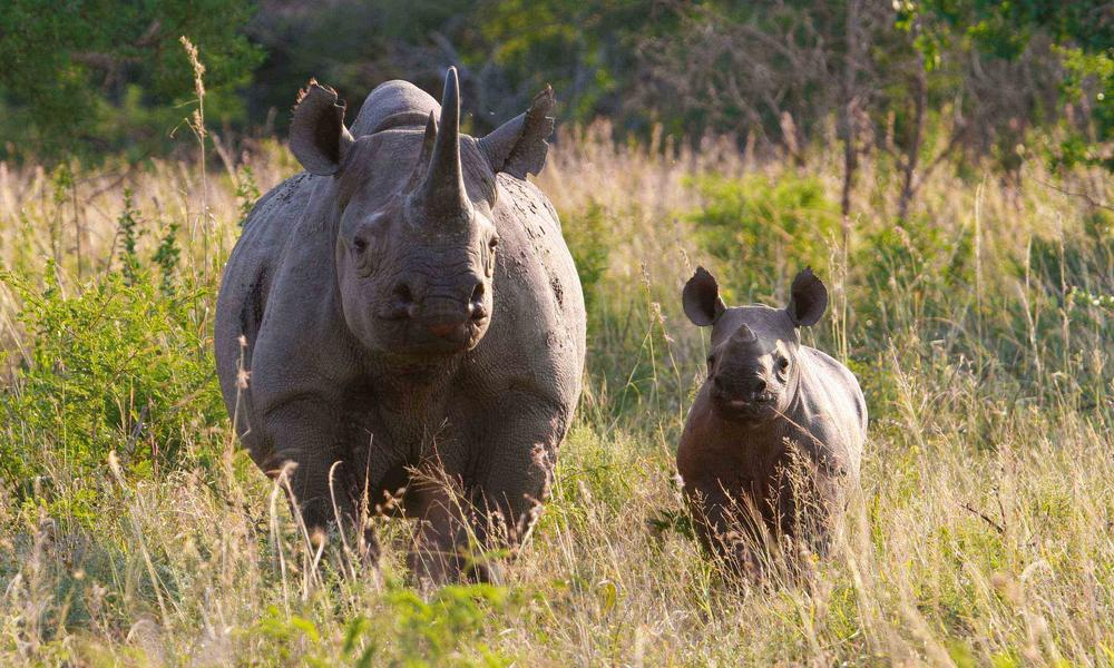 Helicopter Full Hd Wallpaper Alarming Rhino Poaching Rates Reported In Southern Africa