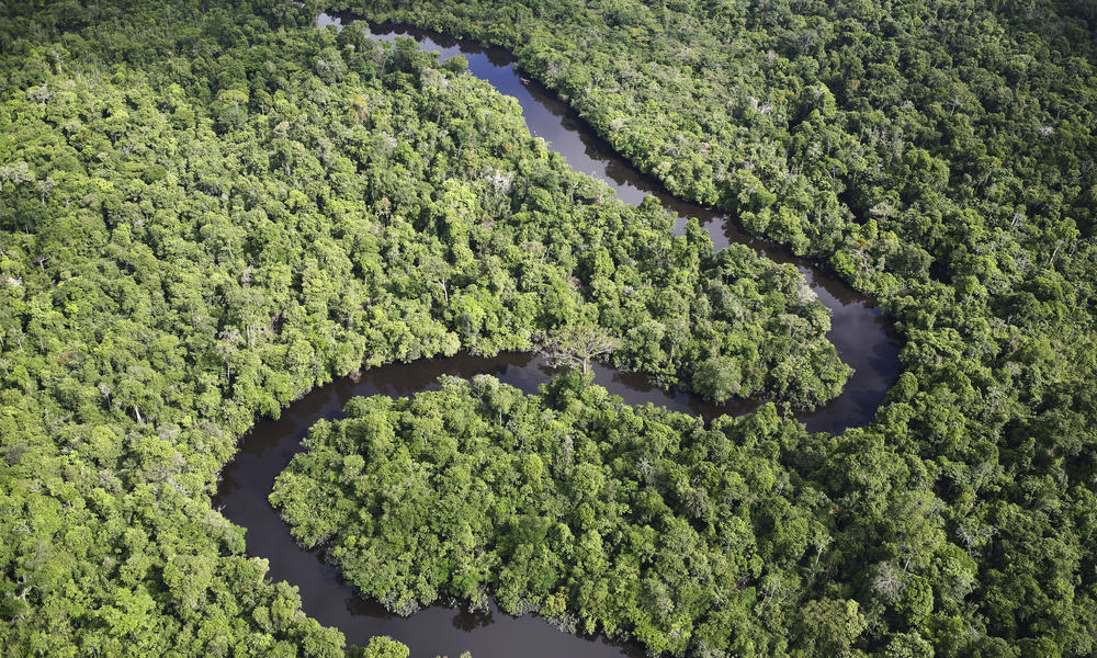 11 Of The Worlds Most Threatened Forests Stories Wwf