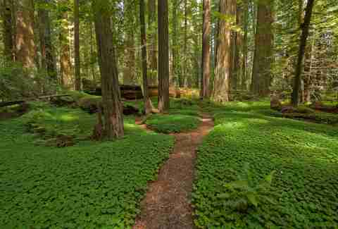Most Beautiful Forests In The World Thrillist