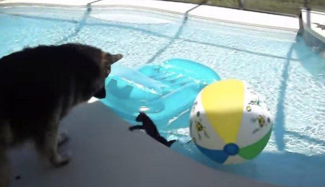 Dog Babysitter Gets Scared When His Little Kitten Almost Falls In - pet babysitter