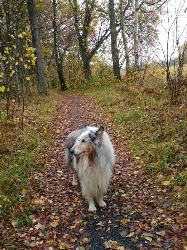 Gandalf i skogen