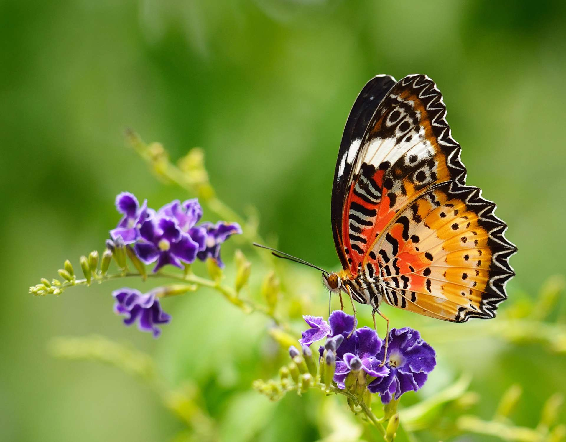 Beautiful Pictures Of Flowers And Butterflies Birds Scorpio April 2018 Monthly Horoscope Astrosofa