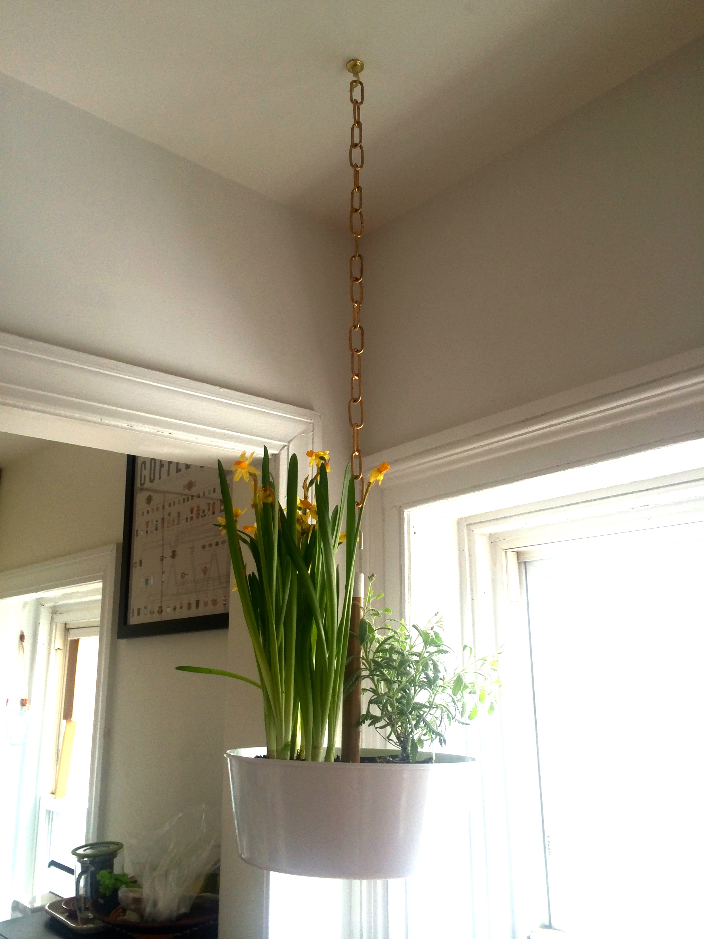 Hangplant Ikea How To Hang A Planter Ala The Ceiling Without Task Rabbit