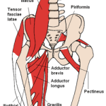 It's Worth The Trouble To Get To Know Your Psoas Muscles